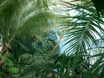 medium_jardim_tropical_oceanario_lx.jpg