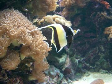 medium_peixe_amarelo_no_oceanario.jpg