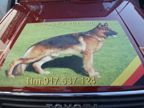 Pombal - www.1portugal.com 483.jpg
